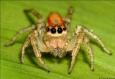 RTA spider